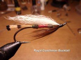 Royal Coachman Bucktail .jpg