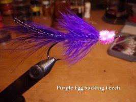 Purple Egg Sucking Leech  .jpg