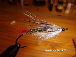 Hartwick's Duck  .jpg